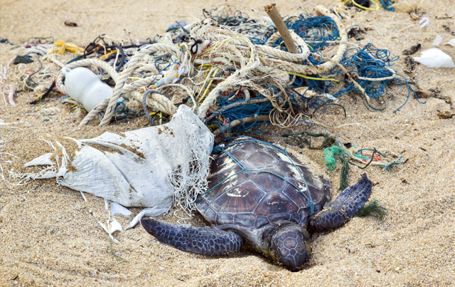 ocean-trash-impact-on-sea-turtles copy